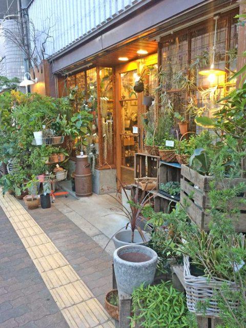 ブログ0617 徒歩 通勤 エコ 健康 植物
