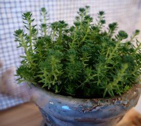 植物を育てやすい家