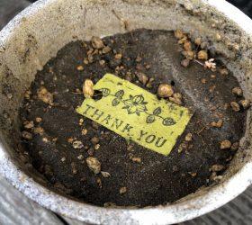 シードペーパーは環境にやさしいリサイクルペーパー
