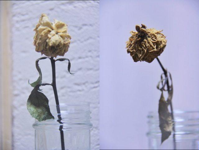 珪藻土とビニールクロスの比較